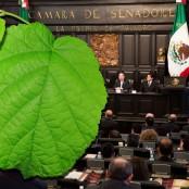 web-senado-mexico-ecology-leaf-willie-angus-cc-presidencia-de-la-repc3bablica-mexicana-cc